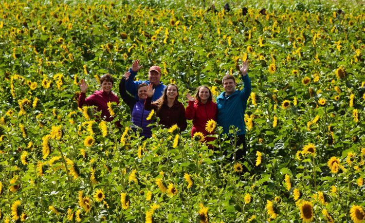 An image of a group of people in a sunflower field at Bowden Sunmaze in Alberta, Canada. - Alberta road trips.