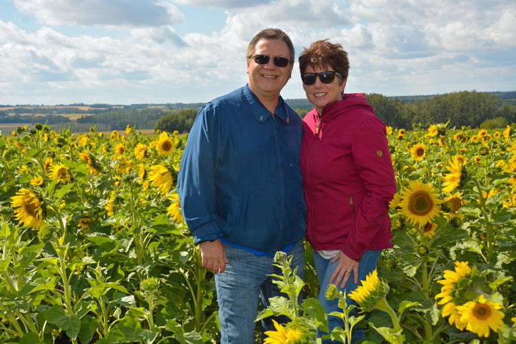 An image of a couple standing in a sunflower field at the Bowden Sunmaze in Bowden, Alberta, Canada.
