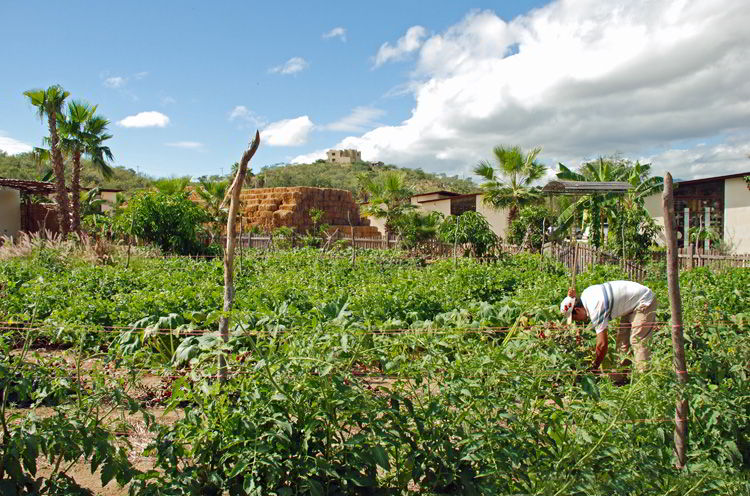 An image of the organic vegetable fields at Flora Farms in Los Cabos.