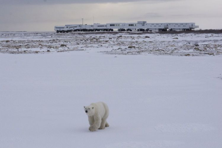 An image of the Tundra Buggy Lodge in Churchill, Manitoba with a polar bear in front of it.