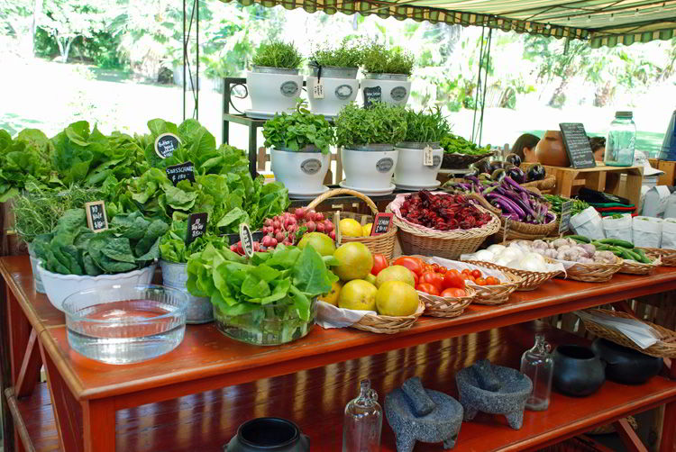 An image of the organic vegetables on Flora Farms in Cabo San Lucas, Mexico.