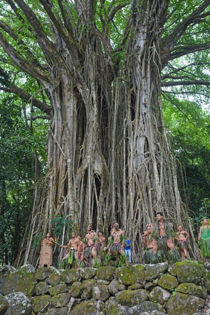 An image of a group of dancers performing in front of an enormous banyan tree on the island of Nuka Hiva in the Marquesas Islands of French Polynesia.