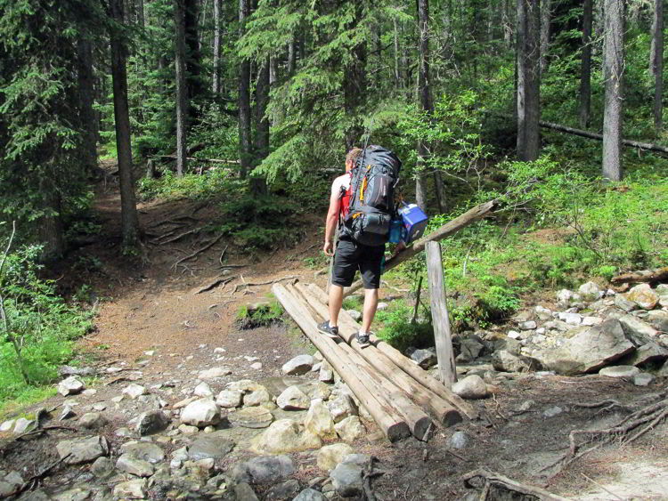 An image of a small bridge crossing on the Allstones Lake trail in Bighorn Backcountry in Alberta, Canada.