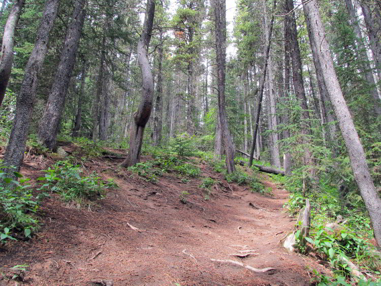 An image of the Allstones Lake trail - a steep section - in Alberta, Canada.