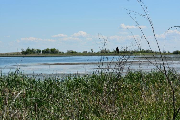 An image of the marsh near Lake Newell near Brooks, Alberta, Canada.