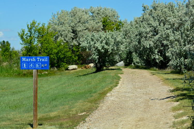 An image of the sign for the marsh trail at Kinbrook Island Provincial Park near Brooks, Alberta, Canada.