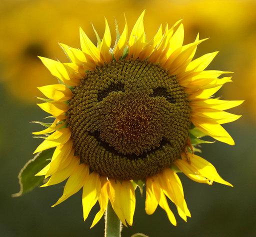 Global Happiness_248953