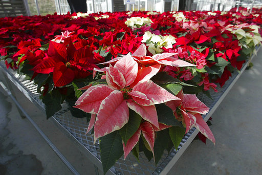 Science Says Holiday Myths_302925