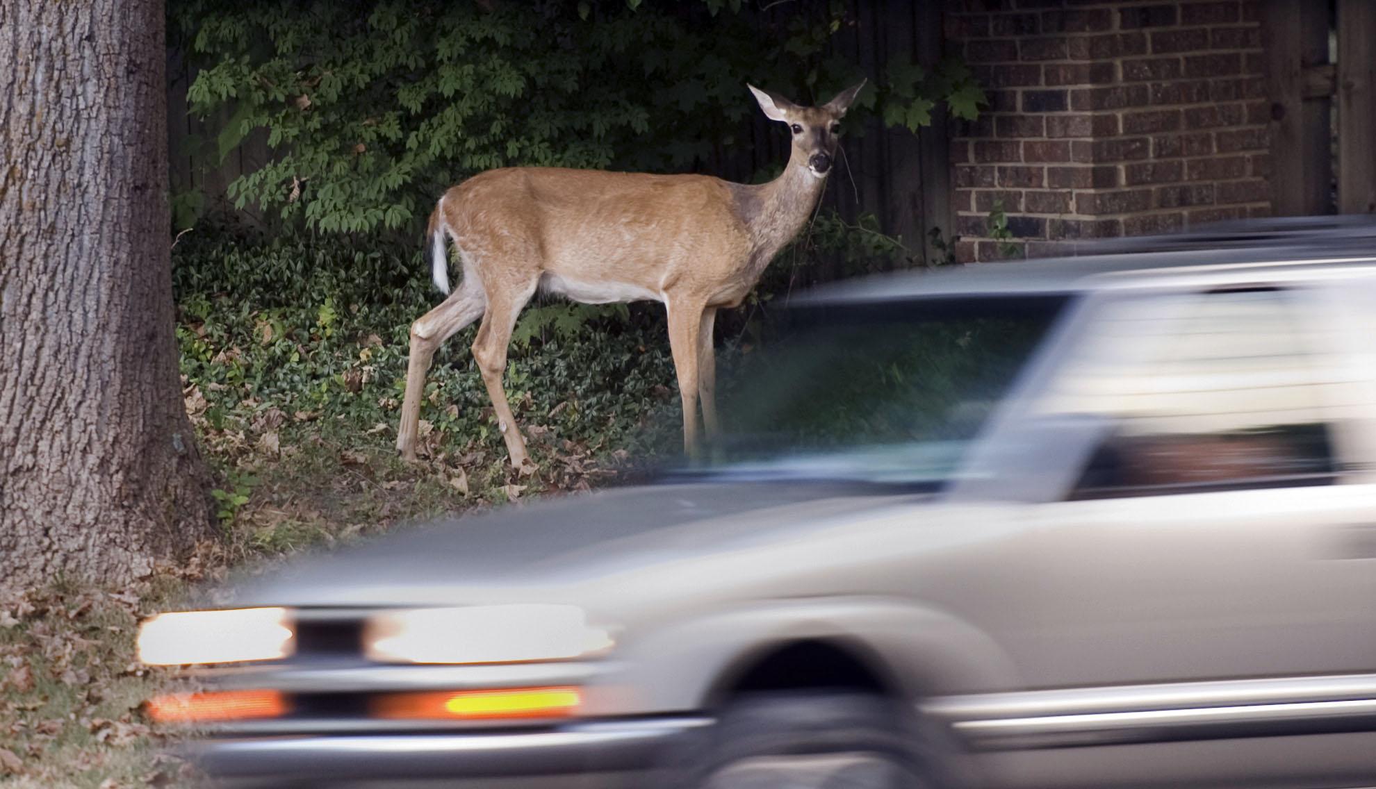 Exchange Urban Deer_165015