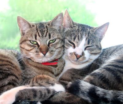 Choisir un chat mâle ou femelle - Comment choisir un chat ...