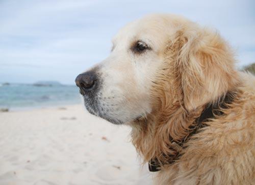 votre chien à la plage