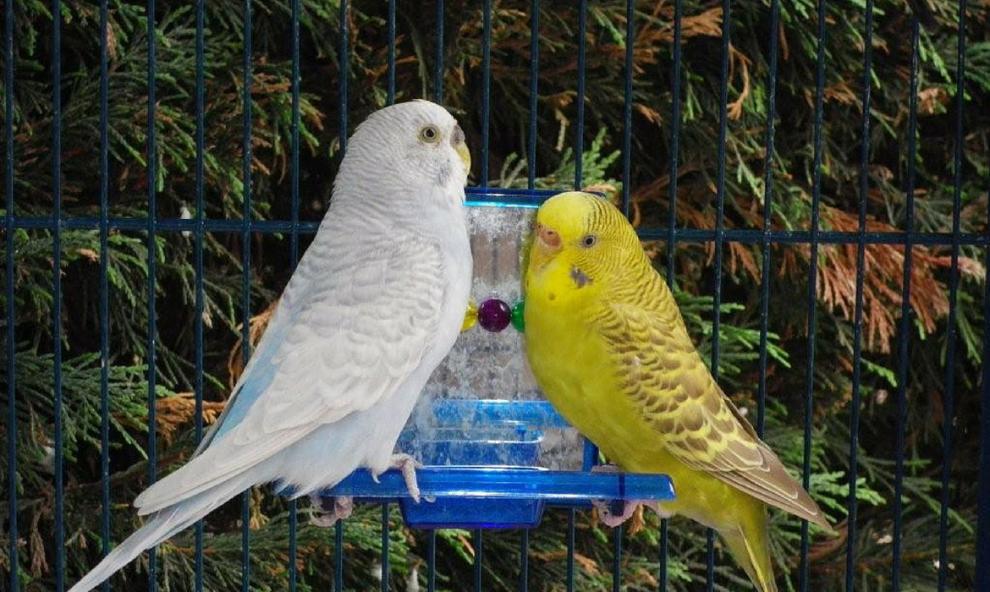 un compagnon pour oiseau