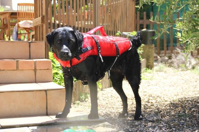 gilet de sauvetage pour chien Trixie