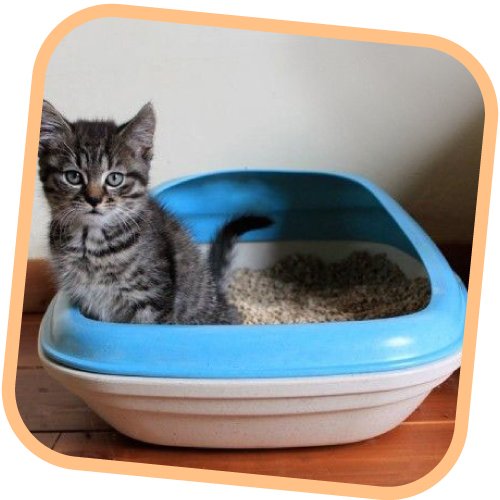 Bac Beco Tray pour chat