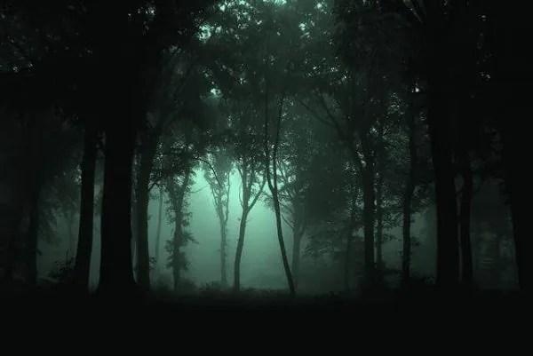 9 Hutan Yang Menyeramkan Yang Terdapat Di Seluruh Dunia