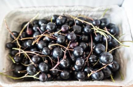 Ventegodtgaard – blackcurrant