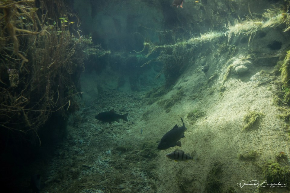 AQUA Akvarium