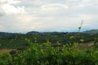 italie-piemonte-langheweb528