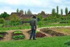 de nieuwe vegetable garden