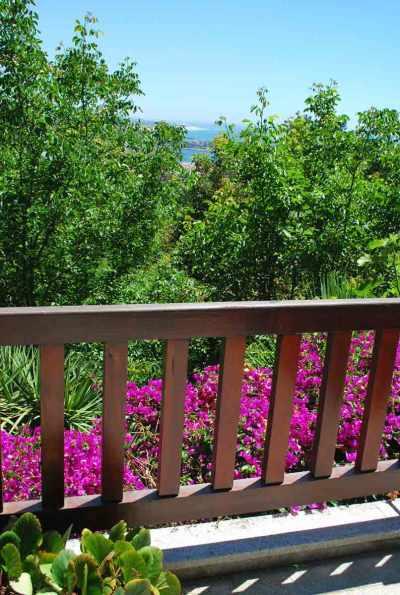 Overvloedig bloeit de bougainvillea