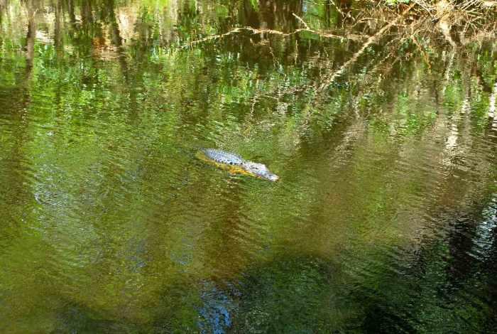 Florida Corkscrew Swamp Sanctuary
