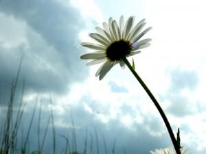'De tere bloemblaadjes van mijn ziel'