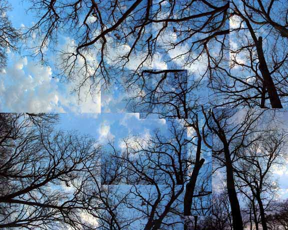Fractaltreesw Veil