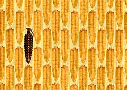 Het lijkt er steeds meer op dat de GMO-granaat in Monsanto's eigen toko gaat ontploffen..