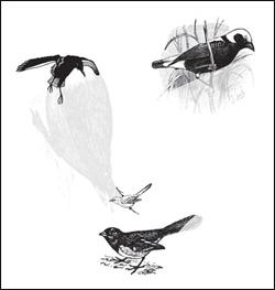 bird_face_optical_illusion