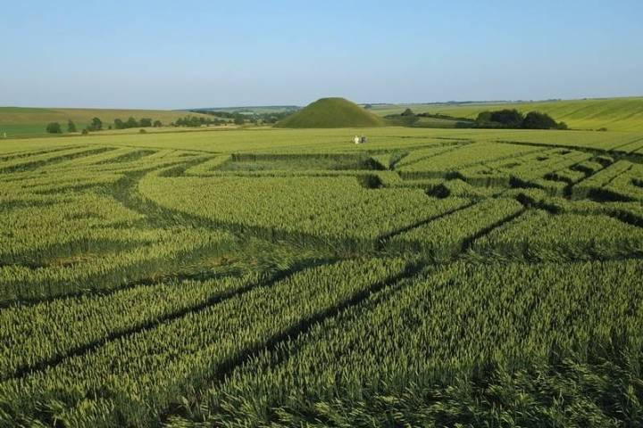 De verschenen graanformatie ziet er vanaf de grond op deze manier uit. Om je een indruk te geven van de grootte van deze formatie. Op de achtergrond de mysterieuze piramide Salisbury Hill,
