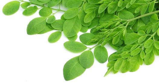 waar is moringa goed voor