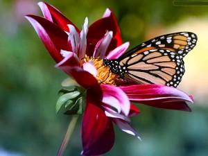 Van knopje naar bloem, van rups naar vlinder. Transformatie is ons leven..