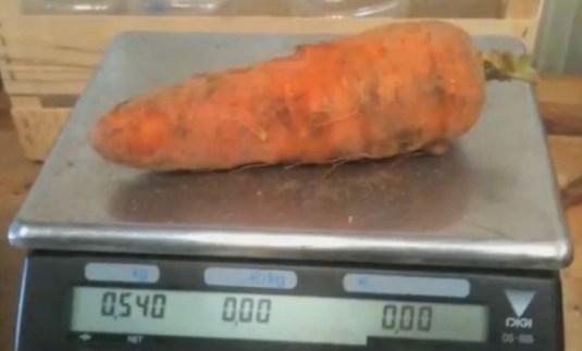wortel weegschaal