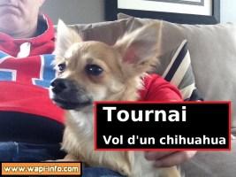 Tournai : le chihuahua de Fabrice a été volé - il cherche des informations