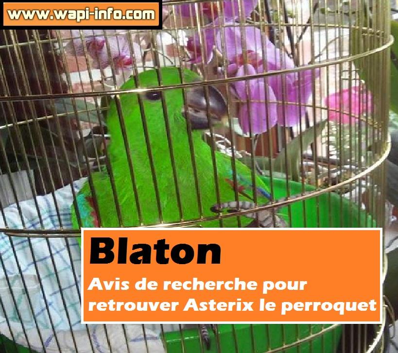 Asterix Perroquet blaton
