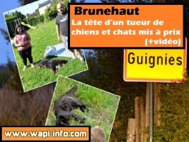 Brunehaut : la tête d'un tueur de chiens et chats mis à prix (+vidéo)