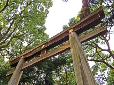 Meiji Shrine - Tokyo