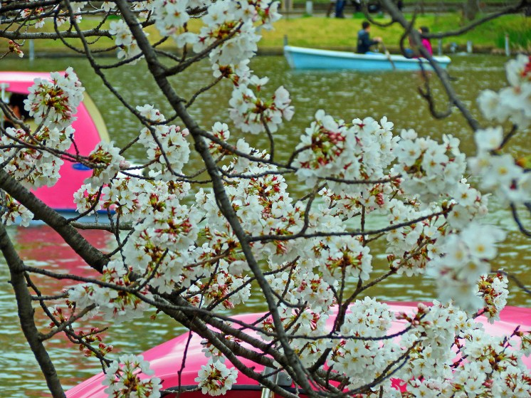 Ueno Park Lake - Shinobazunoike - Tokyo