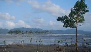 Penanaman 1000 Bibit Pohon Bakau di Bibir Pantai Manado