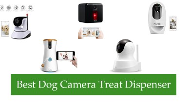 Best Dog Camera Treat Dispenser Review
