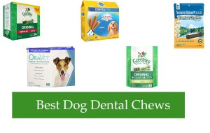 Best Dog Dental Chews Reviews