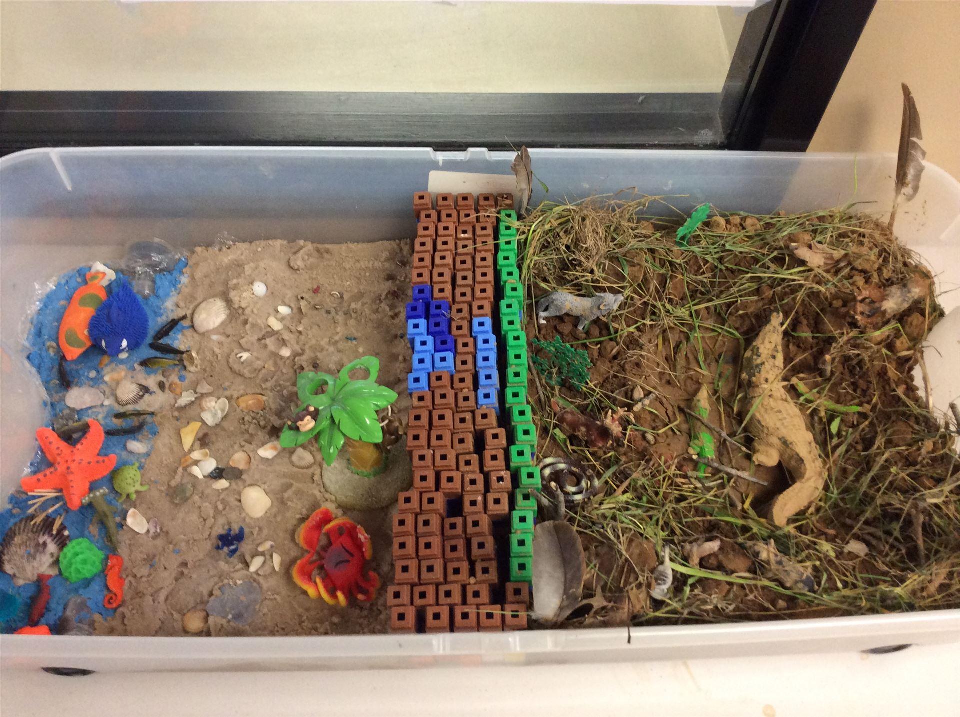 2nd Grade S Habitats Project