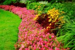 Blooming flowers in late summer garden flowerbeds