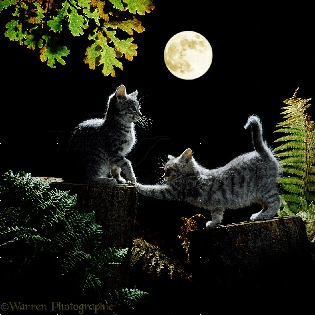 Image result for two cats in the moonlight
