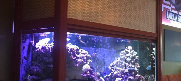 Frisco fish tank