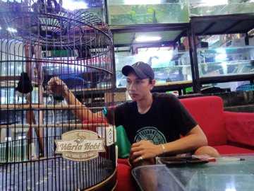 nyoman sinyo bird & fish palagan sleman