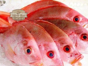 Usaha budidaya peternakan ikan air tawar saat ini dinilai jadi salah satu kesempatan bisnis yang sangat menguntungkan. Indonesia dengan wilayah air tawar yang banyak dan juga disertai dengan populasi yang banyak sudah tentu bisa membagikan kesempatan besar untuk seluruh pelakon bisnis. '' Dengan berkurangnya hasil tangkapan ikan laut akibat overfishing hingga penggantinya ialah ikan air tawar yaitu ikan lele, nila, gurame, serta yang lain. Akhir- akhir ini pula tidak sedikit sekali permintaan pasar yang hendak tingkatkan semangat usaha budidaya ikan air tawar ini. Dari sekian tidak sedikit tipe ternak ikan air tawar yang dibudidayakan, selaku berikut yakni usaha ternak ikan yang sangat menguntungkan: 1. Ikan Lele Ikan Lele masih jadi primadona. Pangsa pasar ikan tersebut luas, pemeliharaan yang gampang serta dapat dibudidayakan pada lahan yang kecil. Untuk para pendatang baru, modal membuat membuka usaha lele ini sangat kecil modal. '' Dengan modal 1 jutaan anda telah bisa mengawalinya, serta melulu dalam jangka masa- masa 3 bulan anda telah bisa memanen lele. Beserta ikan proses budidayanya mengenakan metode yang bagus, masa- masa yang diperlukan untuk panen hendak lebih kilat. Budidaya ikan lele juga jadi salah satu kesempatan usaha yang sangat menjanjikan disesa. Sebab, permintaan pasar hendak ikan mengkonsumsi tipe ini sangatlah besar. Ikan lele ini mempunyai tidak sedikit penggemar karena memiliki kandangan rasa yang gurih serta renyah. Metode budidaya ikan lele ini juga mempunyai waktu pemeliharaan yang terkategori sangat waktu pendek karena pertumbuhan ikan lele yang sangat kilat. Perawatan yang dicoba buat budidaya ikan ini juga bukanlah susah. Ikan lele juga mempunyai harga yang tercantum murah serta terjangkau, sehingga ikan ini lebih jarang banyak peminatnya dibandikan dengan ikan tipe lain. Untuk memulai usaha ternak ikan lele ini, tentu saja sangat terbuka sekali peluang budidayanya. Sebab permintaan ikan lele cenderung lebih stabil. Masing- masing hari