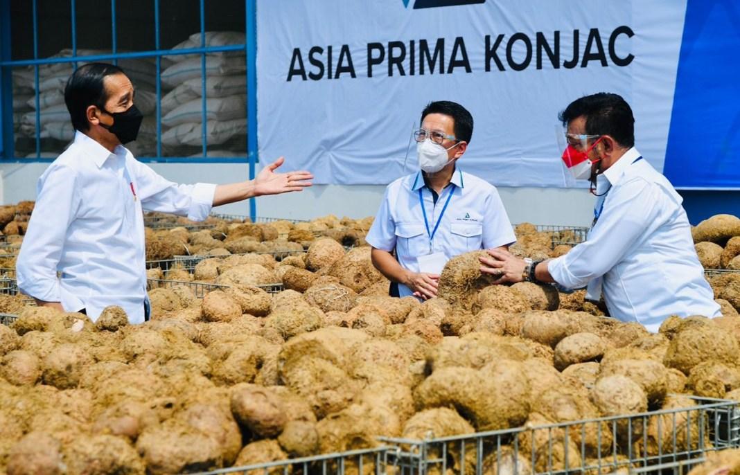 Jokowi Sebut Potensi Porang Makanan Sehat Masa Depan