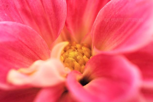 Makro Fotografie | waseigenes.com