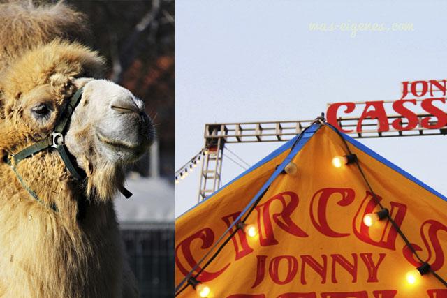 circus_jonny_casselli0